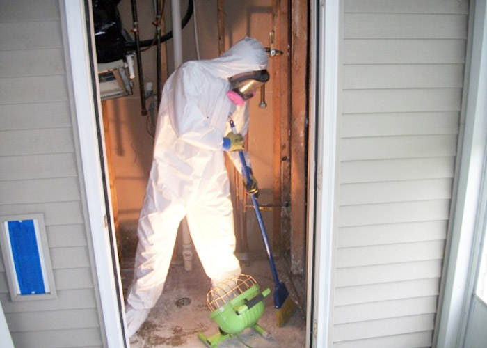 Mold Remediation Services in Metro Detroit Area